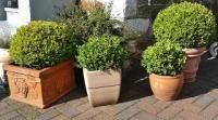 Wie überwintert man Kübelpflanzen am besten ?