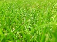 Rasen düngen: Wie es funktioniert und was beachtet werden sollte