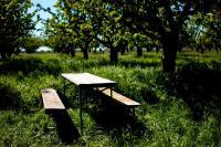 Ratgeber Obstbaumgarten