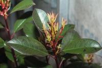 Können Zimmerpflanzen krank machen ?
