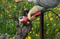 Obstbäume pflegen - Der Schnitt