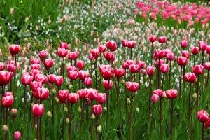 Gartenwelt